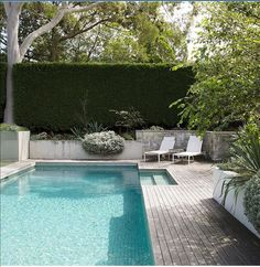 """The pool area is """"relaxed, contemporary and inviting"""", says Peter. The tall hedge is *Cupressocyparis Leylandii* 'Leightons Green'. *Helichrysum petiolare* spills over the wall. The decking is unstained spotted gum."""