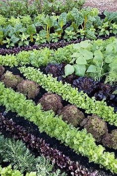 Companion planting just may help your garden grow. #OrganicGardening #gardening #companionplanting