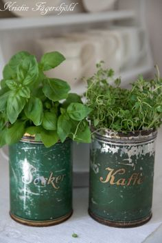 herbs in old tins
