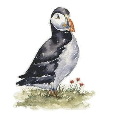 Watercolour Sketch - Puffin no. 2 via Etsy