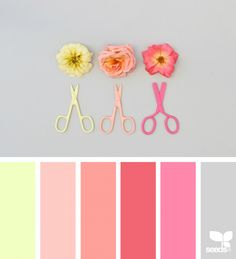 Color Cut | Design Seeds