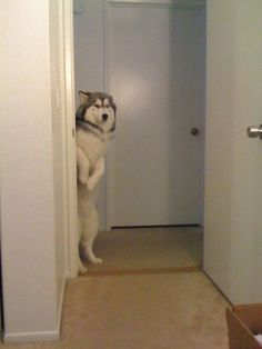 funny dog pics | Tumblr