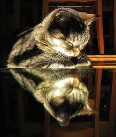 cat / reflection
