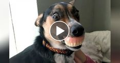 DOGS & PUPPIES  NOTHING will make you LAUGH HARDER