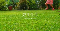 芝生を植える、育てる、手入れをする人に役立つ芝生情報サイト。DIYによる芝生の植え方、選び方、張り方から芝生の手入れ・育て方、芝生の道具をご紹介しています。
