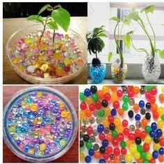 Plantas de interior en jarrones con agua | Cuidar de tus plantas es facilisimo.com