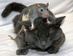 Animales que se crían juntos. Se pueden llevar bien o mal. Estos son amigos.