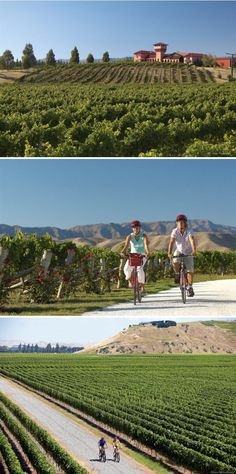 Wine-tasting honeymoons; New Zealand