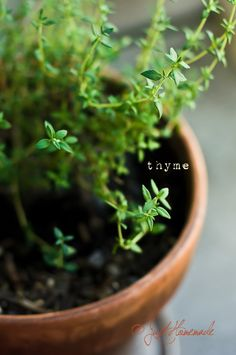 I have thyme growing in my garden.