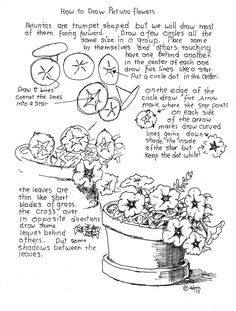 How to Draw Worksheets for The Young Artist: How to Draw Petunia Flowers Worksheet