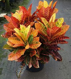 Ecosia - the search engine that plants trees Patio Plants, Garden Plants, Florida Flowers, Architectural Plants, Rose Trees, Side Garden, Miniature Plants, Foliage Plants, Backyard Landscaping