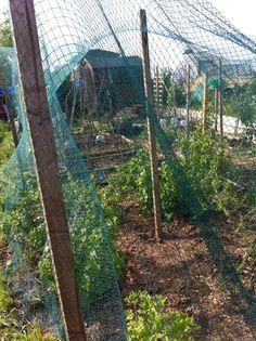 New fruit netting