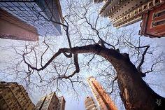 Zona-Arquitectura: Horizontes Verticales #Fotografía #Arquitectura