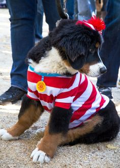 Where's Waldo - This reminds us of another simplistic formula for an instantly recognizable traveller: stripes, glasses, hat and presto, you're Waldo. Please do not lose this fuzzy friend!  Photo by Vanity Fair