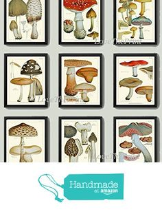 Mushroom Print Set of 9 Antique Botanical Beautiful Red Brown Beige Natural Colored Mushrooms Forest Nature Kitchen Dining Home Room Decor Wall Art Unframed EAP from LoveThePrint https://www.amazon.com/dp/B01KQRU64G/ref=hnd_sw_r_pi_dp_Pdi3ybDYXFW7C #handmadeatamazon