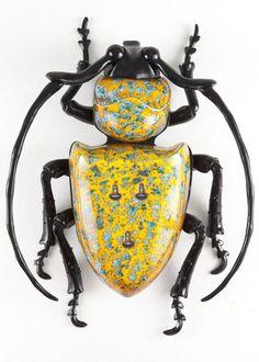 bugs that look like roaches - Hope Elephants Beetle Insect, Beetle Bug, Insect Art, Beetle Juice, Cool Insects, Bugs And Insects, Cool Bugs, Bug Art, Beautiful Bugs