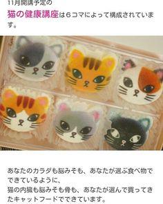 11月から「猫の健康講座」を開催します。にゃにやら気になるというものがありましたらぜひご参加ください♪😆 メルマガ登録すると安く受けられるみたいです✨💕😍 年内、猫のための第一歩はここから!? コンタクトはこちらへ http://s.ameblo.jp/pet-genki/entry-12315580719.html  #naturasanat #nekogohan #naturalfood #ahca #なちゅらさなっと #愛猫 #猫ばか #猫の自然食 #猫と暮らす #健康長寿 #アンチエイジング #猫の健康講座 #猫 #猫好き #猫好きな人と繋がりたい #ねこ #ねこ部 #ねこすたぐらむ #ネコ #ネコ科 #ネコ部 #動物自然療法協会