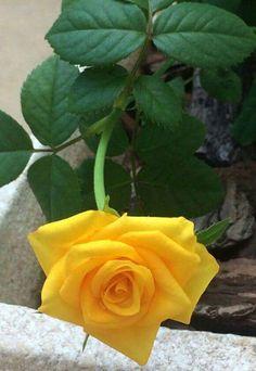 Daisy Painting, Beautiful Roses, Nature, Plants, Instagram, Prayer, Stitching, Gardens, Angel