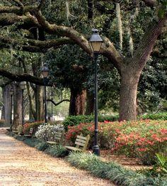 Forsythe Park, Savannah, GA. One of my favorite walks with a camera!