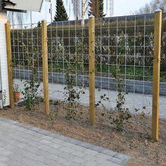 HORTUS Rio-net espalier galvaniseret 90 x 180 cm Diy Fence, Backyard Fences, Backyard Landscaping, Fence Ideas, Backyard Ideas, Fence Garden, Landscaping Ideas, Easy Garden, Garden Art