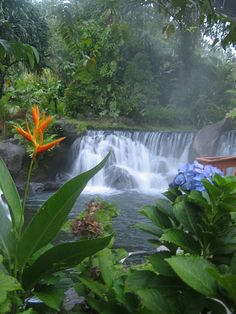 Tabacon Hot Springs in Costa Rica  This is a natural thermal river flowing right out of the Arenal volcano.  The water feels so amazing and being in it is very healing.  The Tabacon resort is one of my favorite place to stay in CR.
