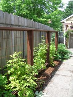 Wolfsmith Residence: Raspberry trellises are a perfect solution for the unused driveway planting strip.