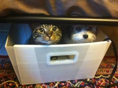 Two friends who are pilot and co-pilot of a filing drawer.