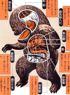 Anatomical diagrams of Japanese monsters