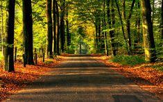 fotografias de bosques | Camino en bosque 1280x800 - Fondo de Pantalla #2326