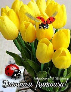 Florile sunt ca mintea omului luminat Beautiful Roses, Good Morning, Day, Plants, 8 Martie, Coffee Break, Facebook, Pictures, Amigos
