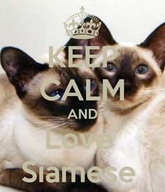 KEEP CALM AND Love  Siamese by Manon Day