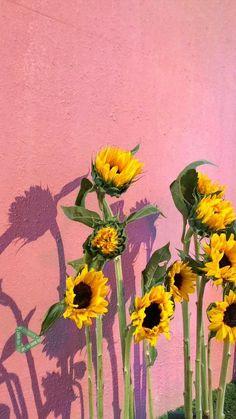 44 Ideas Aesthetic Wallpaper Iphone Kpop Seventeen For 2019 Aesthetic Iphone Wallpaper, Aesthetic Wallpapers, Cute Wallpapers, Wallpaper Backgrounds, Sunflower Wallpaper, Seventeen Wallpapers, Flower Aesthetic, Mellow Yellow, Potpourri