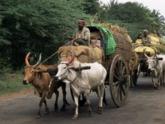 Bullock Carts are the Main Means of Transport for Local Residents Tamil Nadu State India Village Photography, Indian Photography, Nature Photography, We Are The World, People Of The World, Bullock Cart, Body Painting Festival, Rural India, Indian Village
