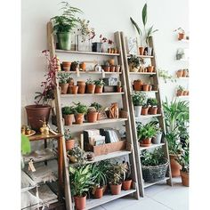 Plant goals :green_heart::bamboo::herb::seedling:...What's your favorite indoor plant? Preferably one with air purifying properties? Although I just read something about how the soil in potted plants can negatively contribute to air quality in your home.