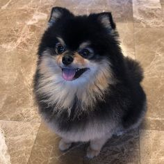 ily my fluffy ball uwu💕🤗 – candid-safeguards Super Cute Puppies, Cute Baby Dogs, Foto Jungkook, Foto Bts, Most Cutest Dog, Dark Tumblr, Bts Dogs, Baby Animals, Cute Animals