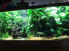 One of our contest winners, top notch planted tank. http://www.americanaquariumproducts.com/index.html