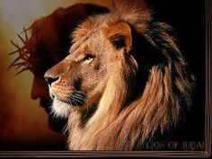 Sacrifice of the Lamb...Lion of Judah