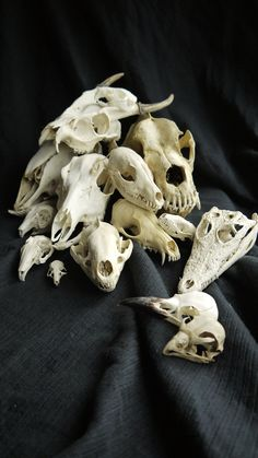 My Dead Things Diary • A pile of skulls ~