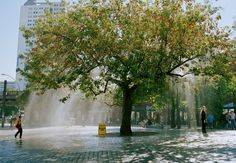 With his installation Miracle Tree Iepe Rubingh amazed pedestrians with a raining tree.