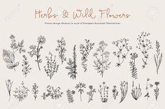 Травы и дикие цветы. Ботаника. Задавать. Урожай цветов. Черно-белые иллюстрации в стиле гравюр.