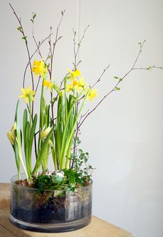 Påskblommor, påskliljor Hemma med Helena | Bloggar om pyssel, mat, bak och hemmafix Easter Flower Arrangements, Easter Flowers, Spring Flowers, Floral Arrangements, Diy Osterschmuck, Garden Frogs, Easter Table Decorations, Spring Bulbs, Deco Floral