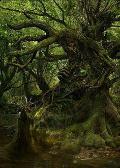 how I visualise trees!