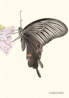 クロアゲハ Pictures Of Insects, Pictures To Draw, Seiko, Colored Pencils, Rose, Illustration, Painting, Colors, Pictures