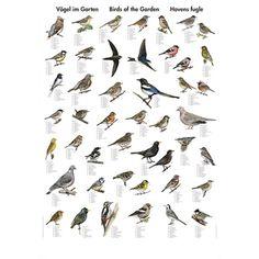 Havens Fugle - Vægkort - Scandinavian Fishing Year Book - Nordisk Korthandel