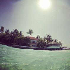 【mahi_guide】さんのInstagramをピンしています。 《#MALDIVES #Gopro #sealife #underwaterphotography #resort  #sea #Maldivesislands #ゴープロ #カメラ #撮影 #ビーチ #ダイビング  #ocean #海外 #旅行 #旅 #camera #photography  #diving #水中写真 #モルディブ #シュノーケリング  #Yolo  #相互フォロー  #snorkeling #scubadiving #海 #夏  #travel》