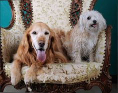 Meet Cassie and Lisa our June Featured Readers! A happy pair of senior sweethearts who live in the Bay Area with mom Kelly. Bay Area, Cassie, Dog Lovers, Lisa, June, Meet, Puppies, Happy, Dogs