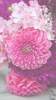 free flower phone wallpaper