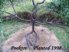 pooktre living growing people trees | Pooktre Tree Shapers
