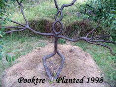 pooktre living growing people trees | Pooktre Tree Shapers