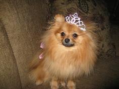 Princess Maggie